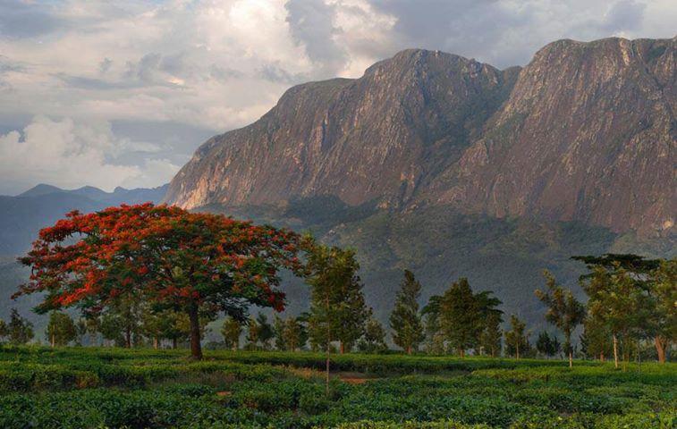 Mulanje mountains in Malawi, Africa